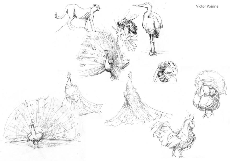 croquis d\'animaux