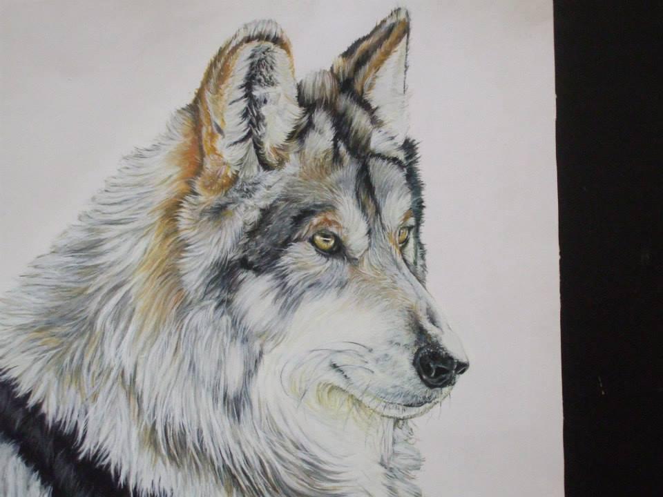 chien loup peint à la gouache