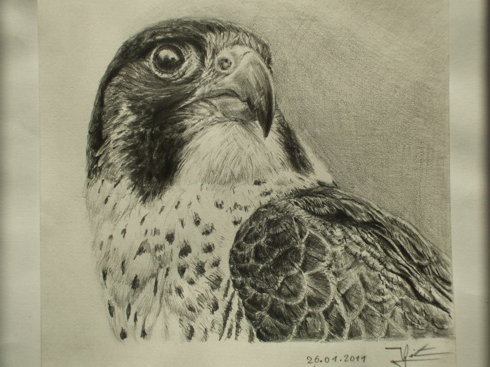 faucon au crayon