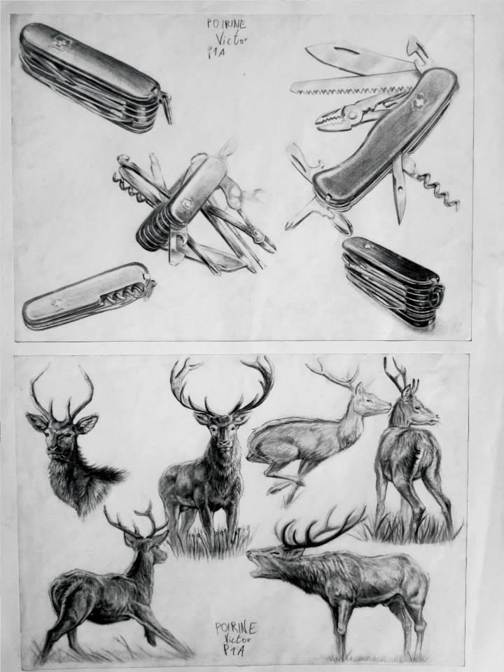 étude d\'un couteau Suisse et d\'un cerf