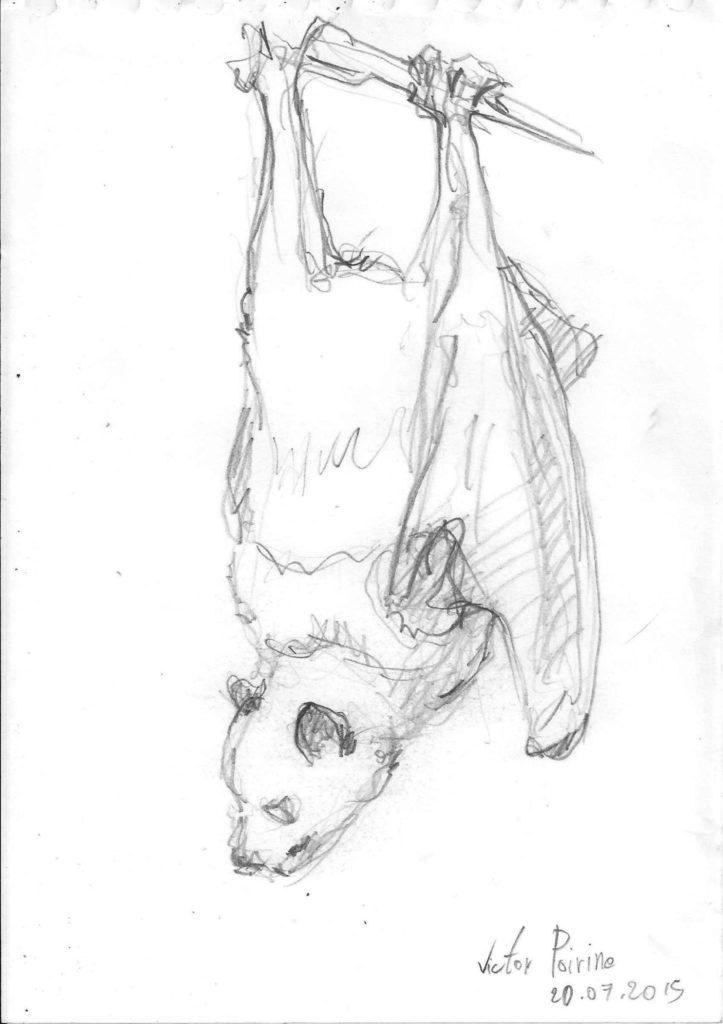 chauve souris réalisée au musée de l\'évolution à Paris