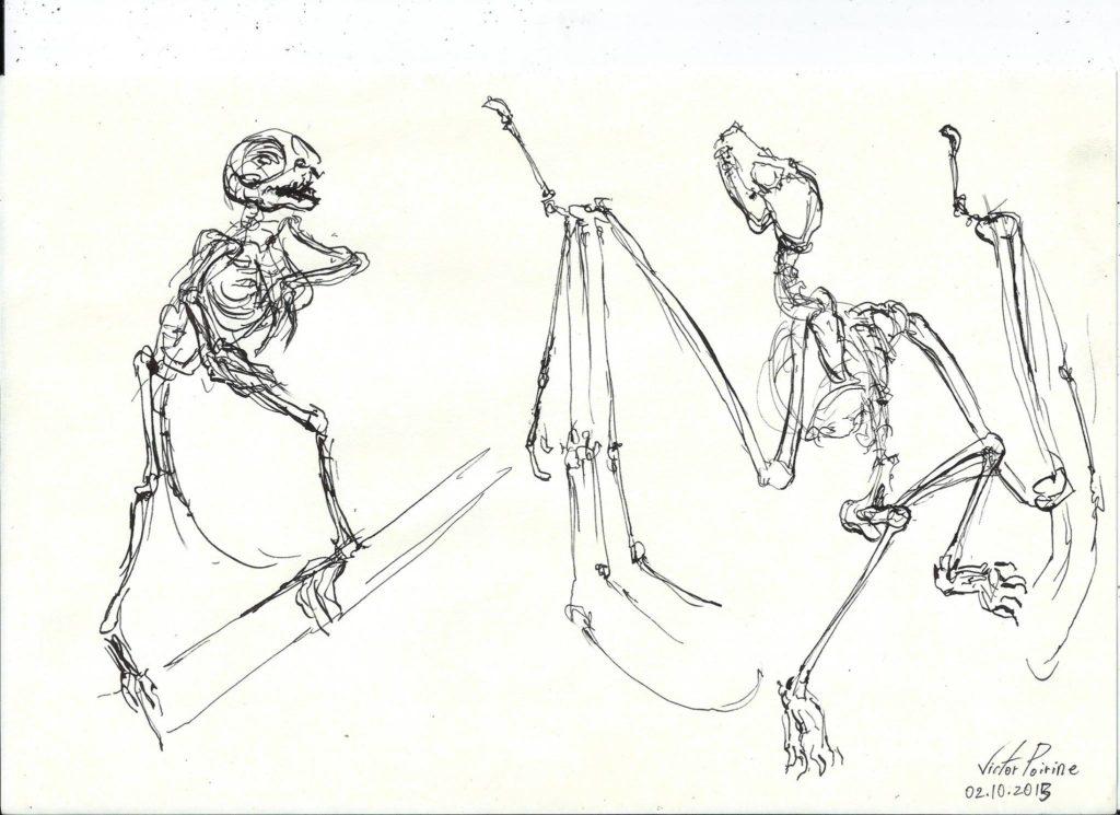 squelettes à l\'encre au musée d\'anatomie comparée (à la plume)