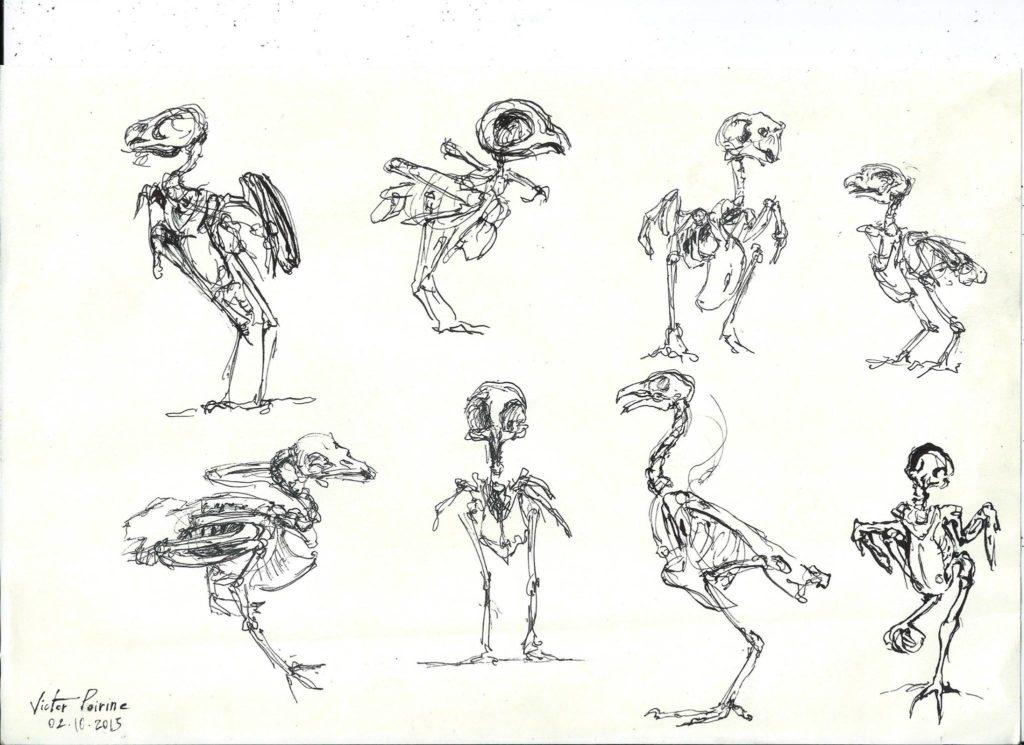 squelettes d\'oiseaux à l\'encre au musée d\'anatomie comparée (à la plume)