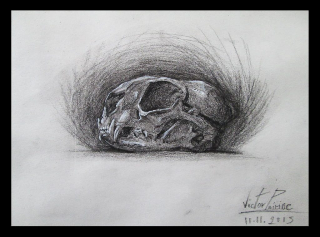 crâne de chat au musée Fragonardfusain
