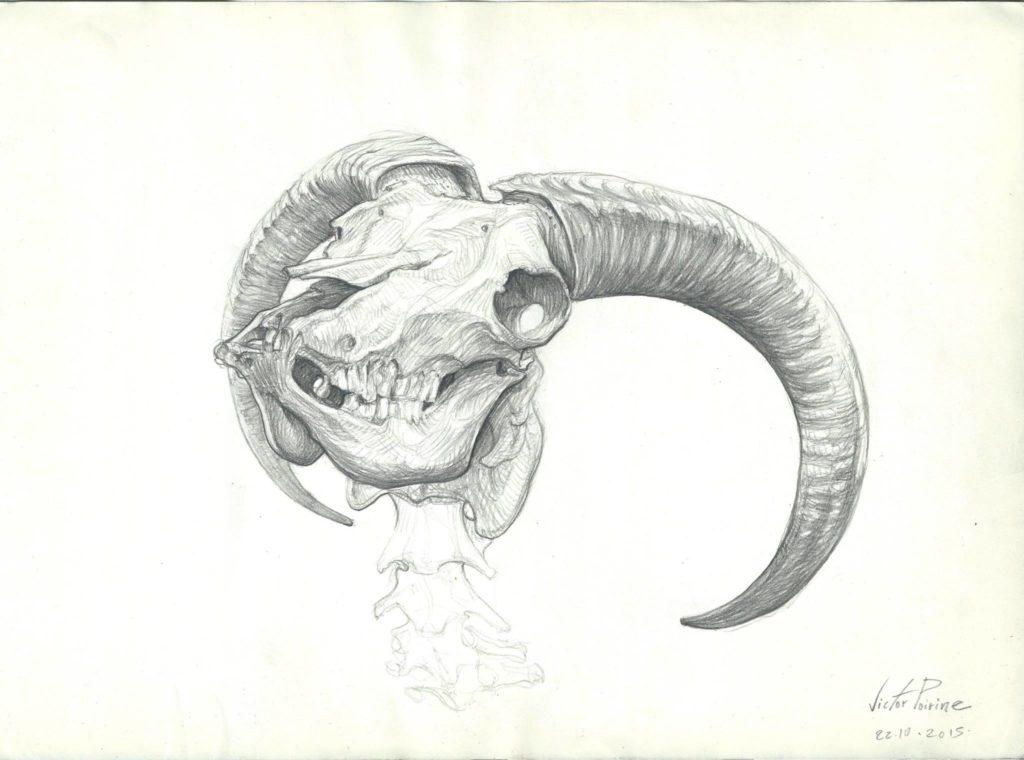 dessin au crayon sur A3 d\'un crâne de chêvre réalisés au musée Fragonard à Alfortville