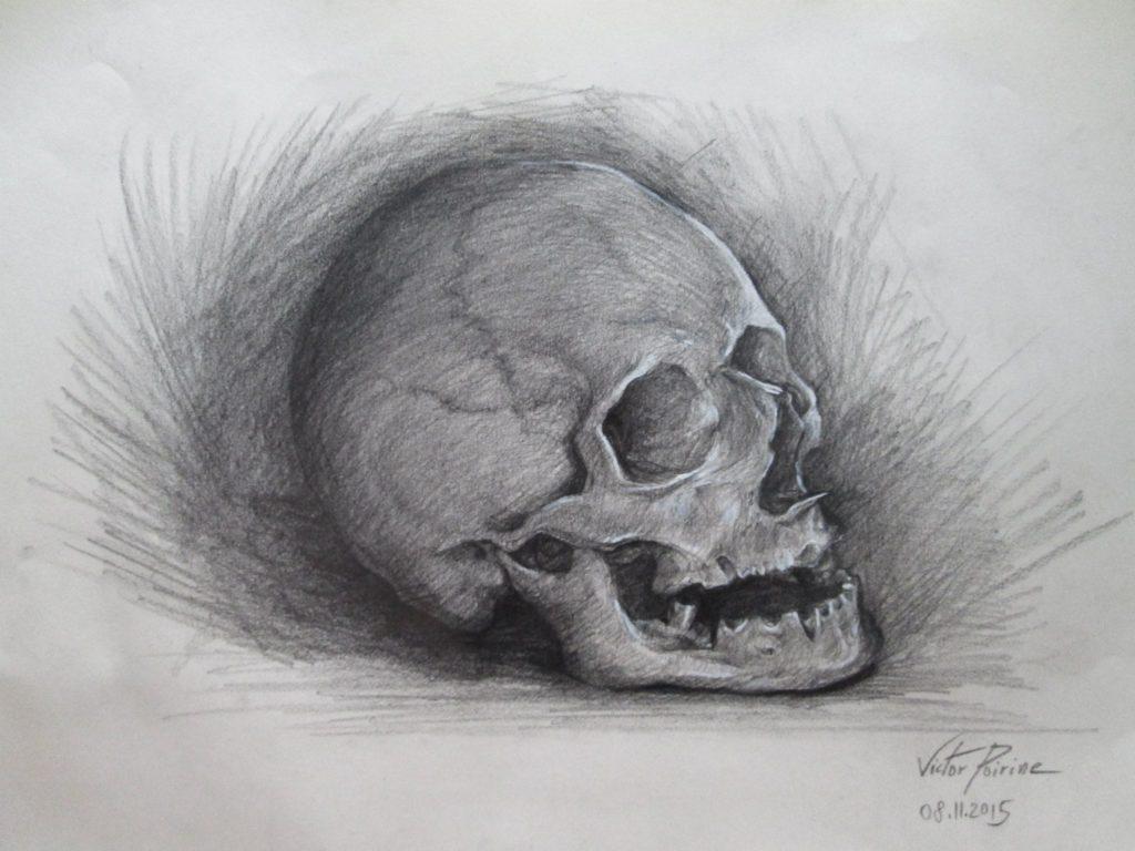 crâne humain au musée Fragonard