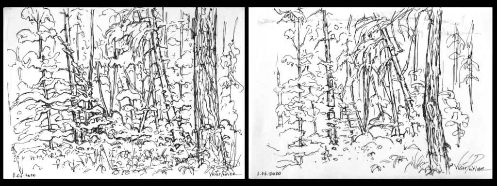 2 croquis au stylo dans la forêt