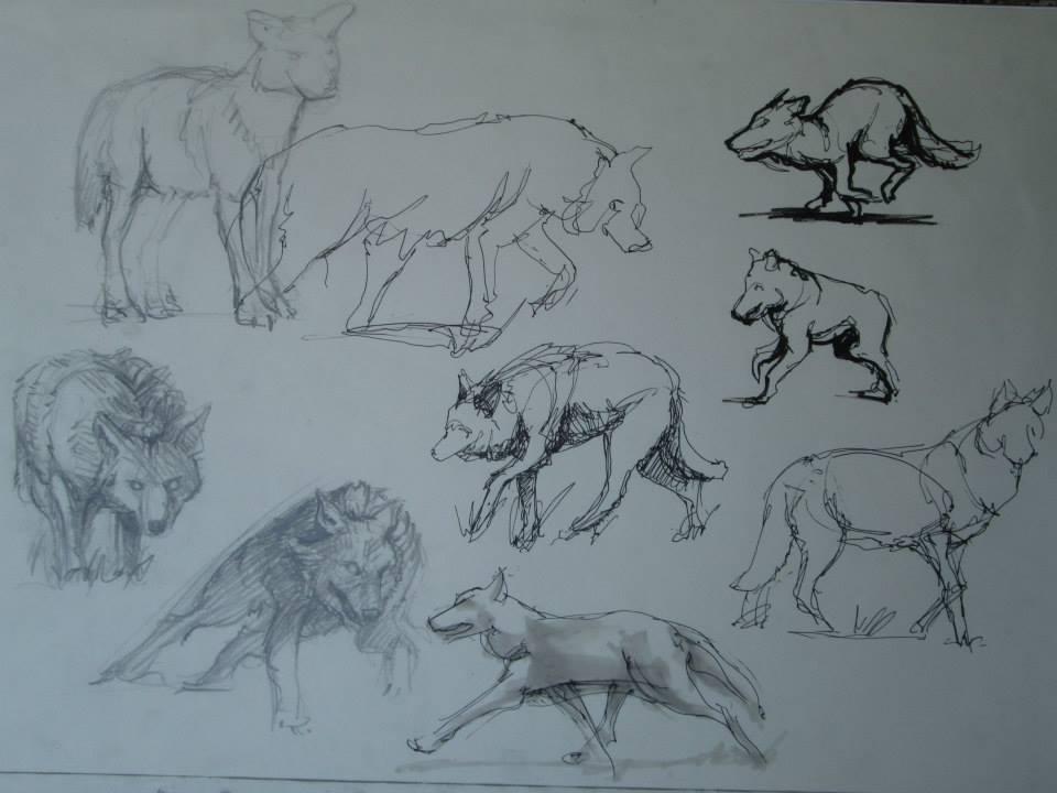 croquis, étude documentaire pour un loup