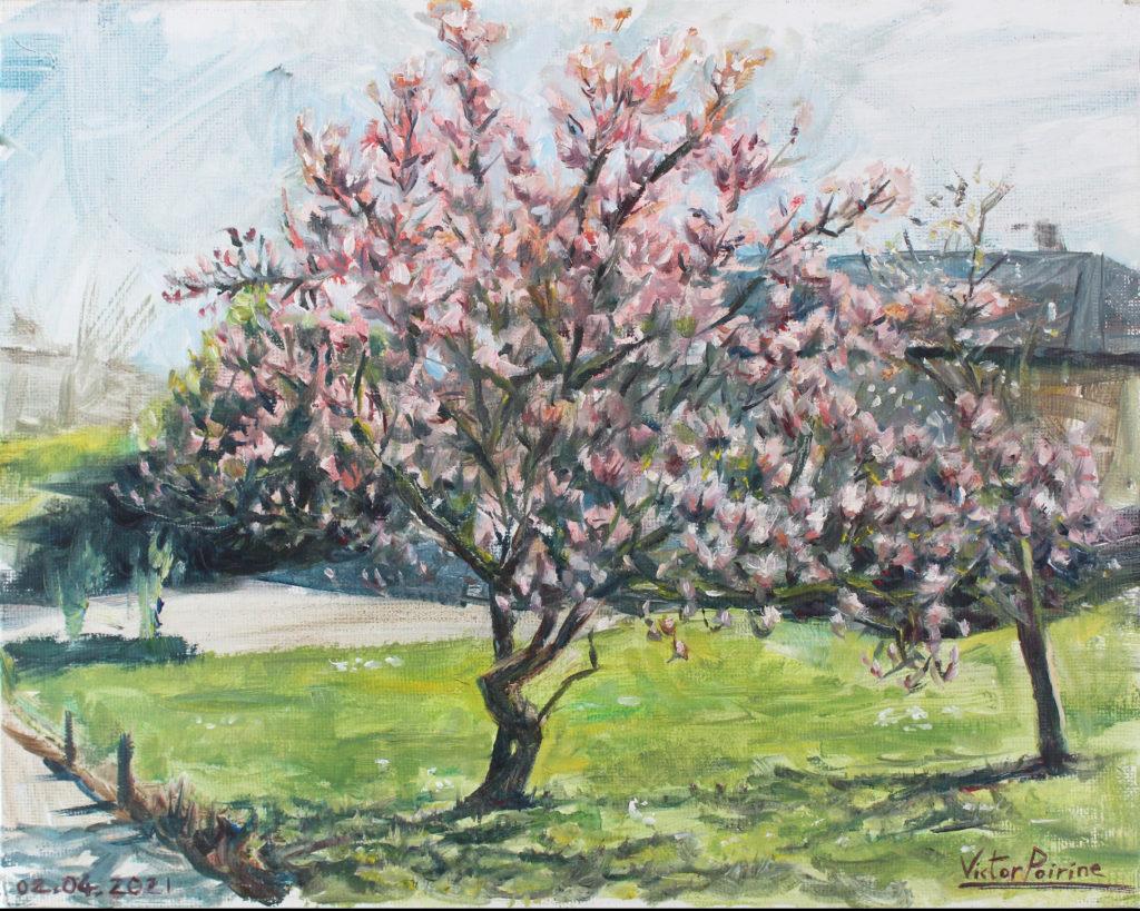 Vendu -  Magnolia en fleurs à St-Nicolas-de-Port huile sur panneau de 24x30cm