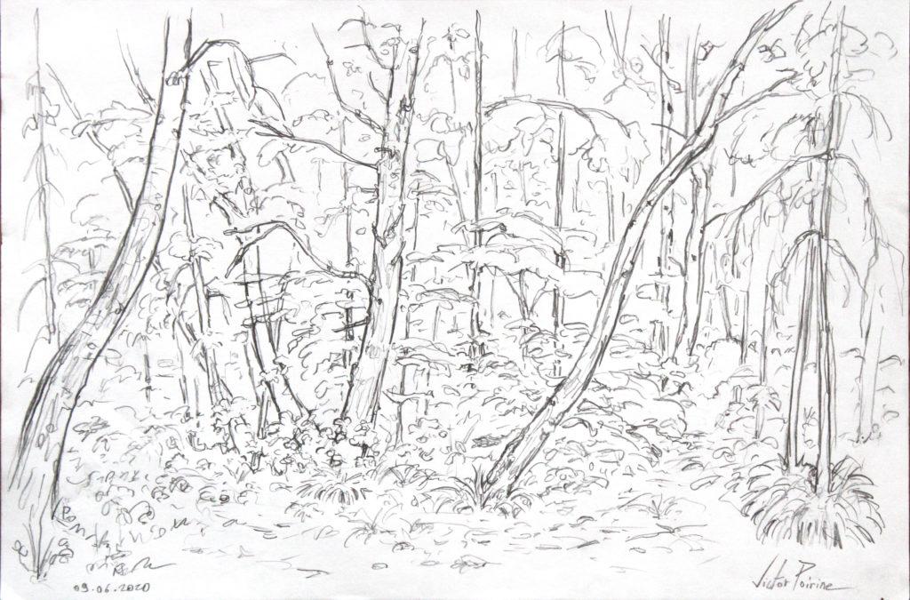 croquis en forêt.
